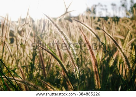 Grass Flowers Sunset Silhouette - stock photo