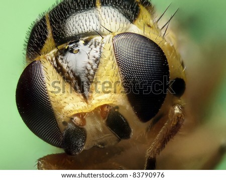 Grass fly profile - stock photo