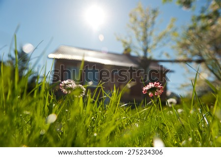 Grass front yard of house