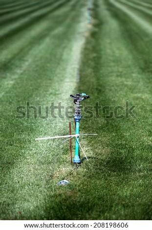 grass garden spring sprinkle water - stock photo