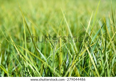 Grass/Grass/Grass - stock photo