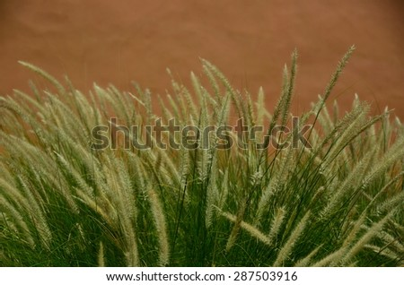 grass green background wall flowers field color nature plant spring relax garden summer - stock photo