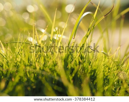 grass/green grass with daylight background.