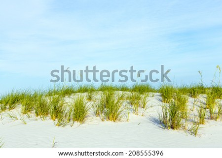 grass grows at dune at a beautiful beach on Dauphine Island - stock photo