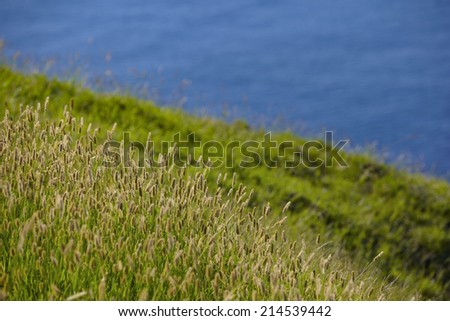 grass illuminated by the setting sun. summer nature background with backlight at the seaside - stock photo