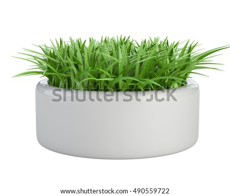 Grass in a white flower pot, isolated on a background 3d illustration.