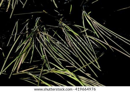 Grass in black water