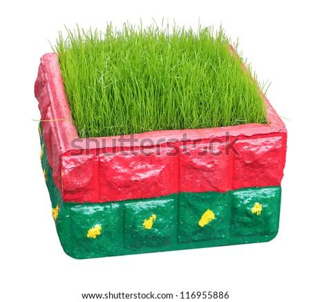 grass in bright box - stock photo