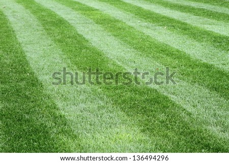Grass in close up - stock photo