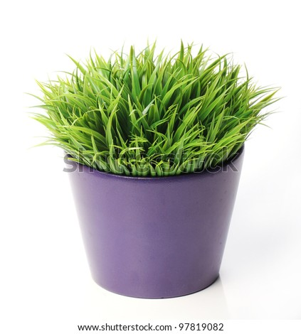 Grass in pot over white background