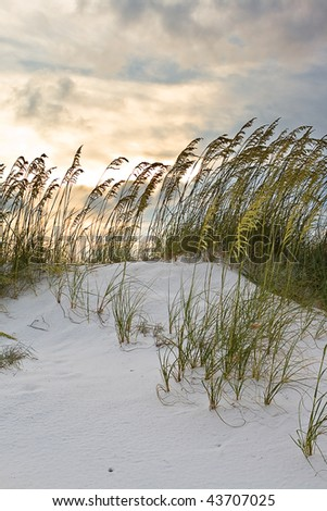 Grass in sand dunes at sunset - stock photo