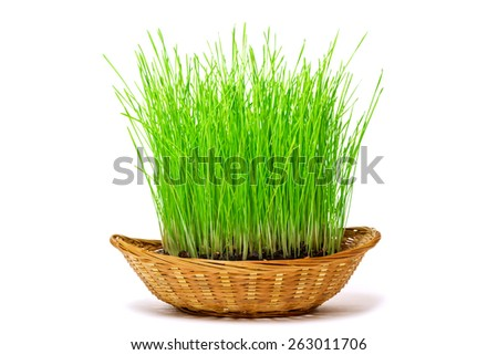 Grass in the basket. Isolated on white background - stock photo