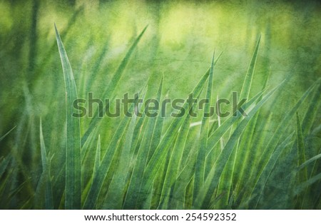 Grass in the morning dew. Natural background. Textured effect. - stock photo
