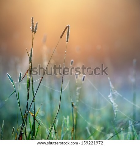 grass in the morning fog abstractly blured background. Shallow depth of field - stock photo
