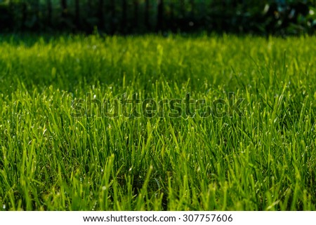Grass in the yard. - stock photo
