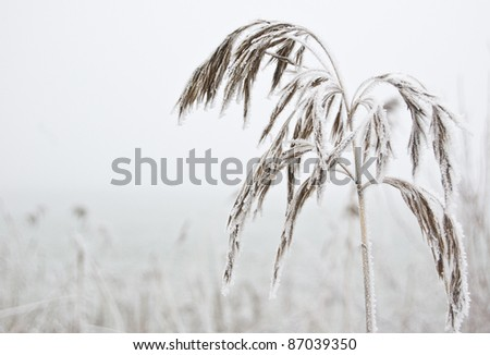 Grass in winter with frost - stock photo
