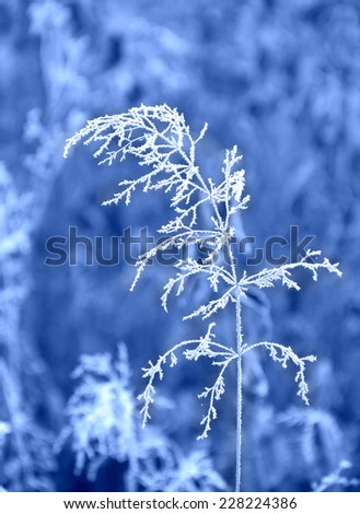 Grass in winter with frozen ice crystals