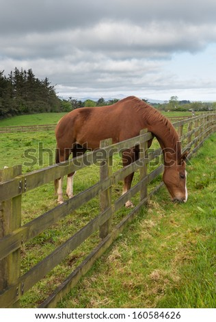 Grass is always greener on the other side of fence as horse stretches to reach its meal and chews the meadow grass - stock photo