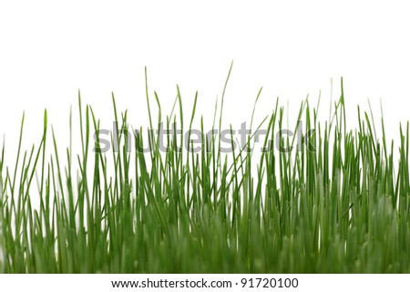 Grass isolated. High detailed photo green grass. - stock photo