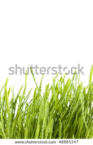 Grass isolated on a white background. - stock photo
