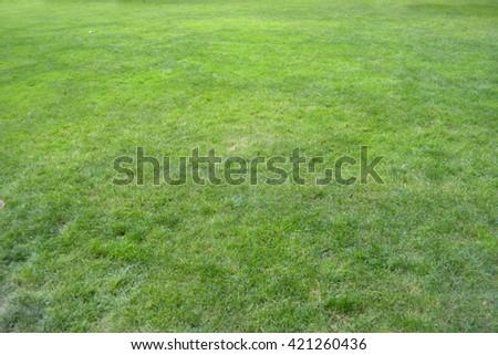 grass  land  - stock photo