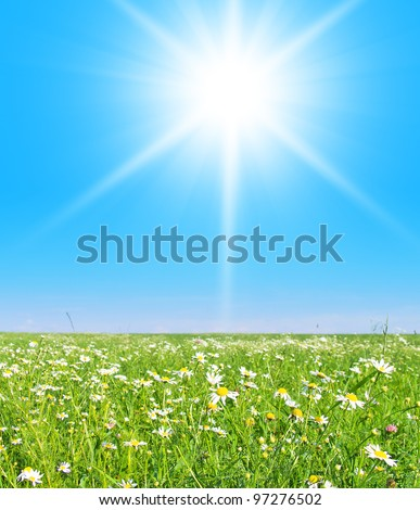 Grass Land On a Sunny Day - stock photo