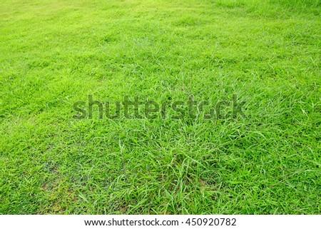 grass lawn - stock photo