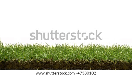grass lawn - stock photo