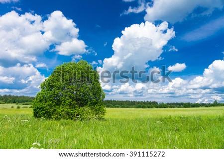Grass Lawn Scenic View  - stock photo