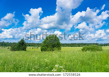 Grass Lawn Vibrant Springtime  - stock photo