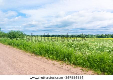 Grass Lawn Vibrant Springtime  - stock photo