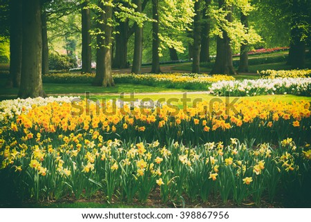 grass lawn with yellow daffodils  in dutch garden 'Keukenhof', Holland, retro toned - stock photo