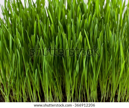 Grass leaves and roots - stock photo