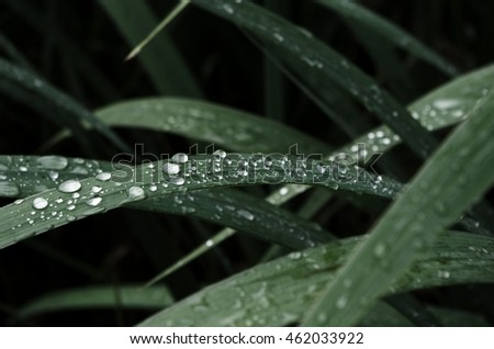 Grass leaves with water drops, soft focus, background