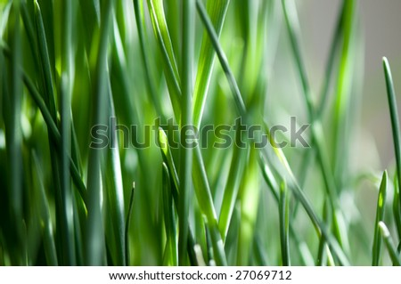Grass lit by sunshine - stock photo