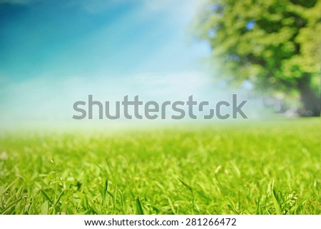 Grass meadow in the park - stock photo