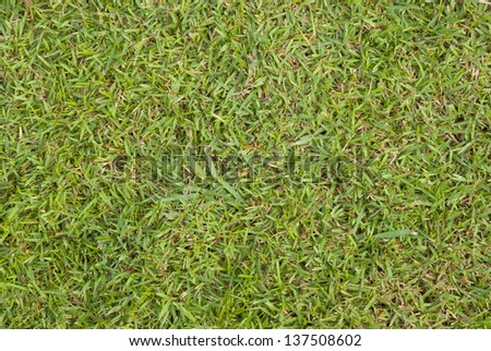 grass meadows after cut - stock photo