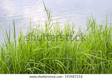 Grass near to a lake - stock photo