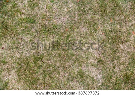 grass of natural background - stock photo