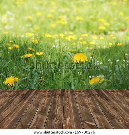 grass of spring flowers and wood floor