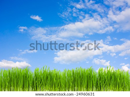 grass on a background of blue sky, summer - stock photo