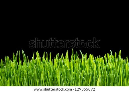 Grass on a black background - stock photo