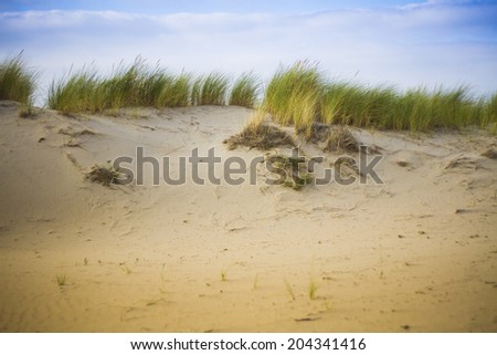 grass on beach - stock photo
