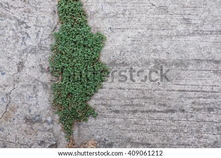 Grass on cement - stock photo