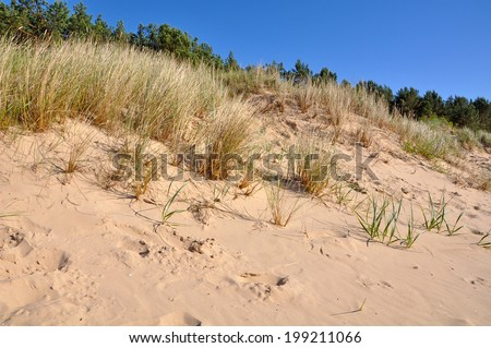 Grass on the beach. Sand dune. Jurmala, Baltic Sea, Latvia.  - stock photo
