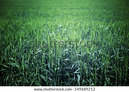 Grass on the field, detail from a forest in the mountains, nature and wildlife in the area,