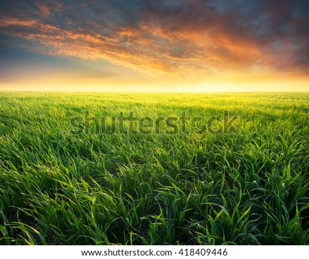 Grass on the field during sunrise. Agricultural landscape in the summer time - stock photo