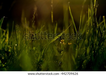 Grass on the meadow in the sunlight - stock photo