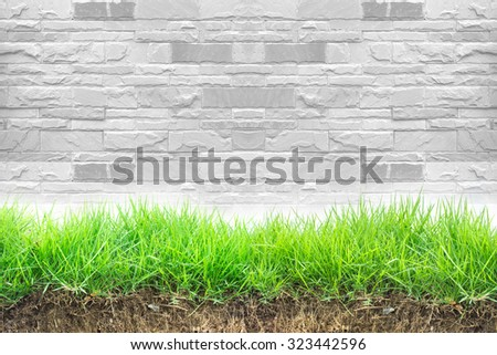 Grass on white wall background - stock photo