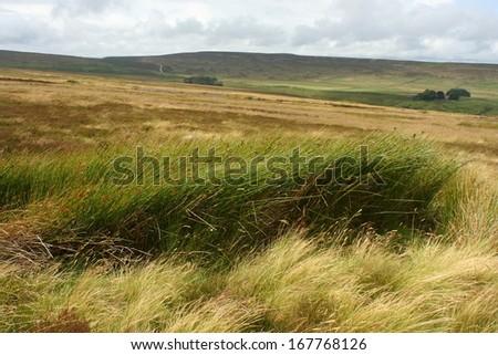 grass on Yorkshire Moors - stock photo